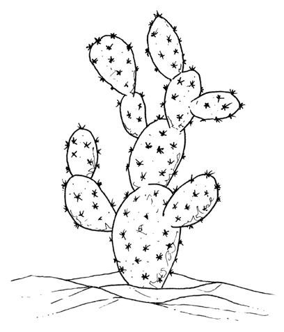ncc taxi ristorante ragusa ibla marina di ragusa
